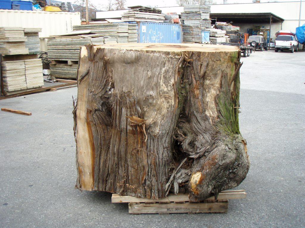 Huge Cedar Log
